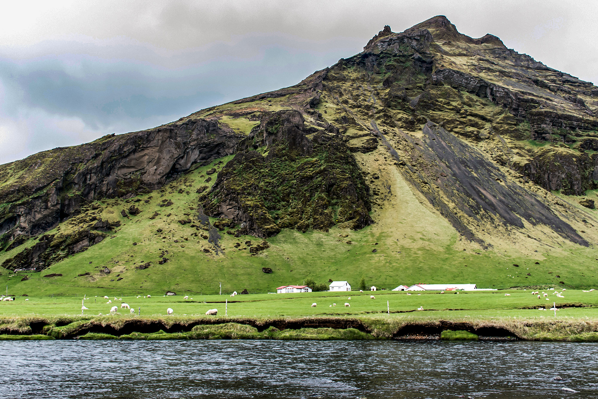 Epic Landscape in Iceland with green grass and sheep
