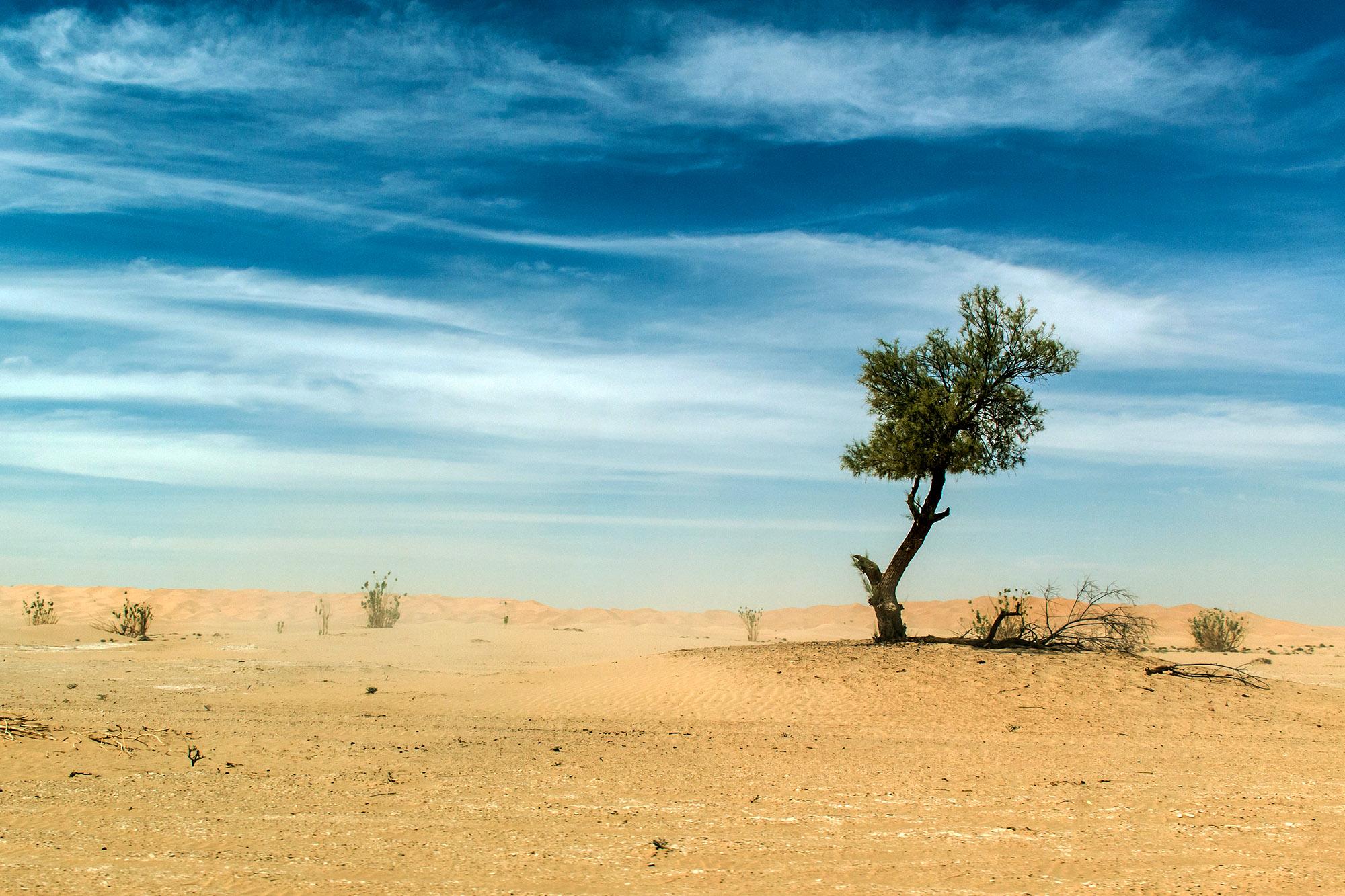 outdoor dry sand tree standing dune in oman sky old biggest desert rub al khali